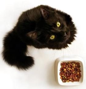 cat and bowl of cat food