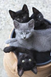 2 black kittens and 2 gray kittens