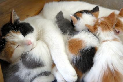 How Do Cats Wean Their Kittens