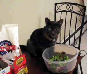 My cat Natalie about to play in a bowl of spring mix
