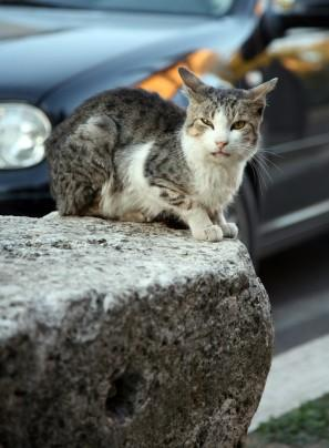 Should You Feed Stray Cats?