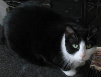 our cat Tim who later developed hyperthyroidism